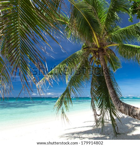 Beautiful palm on white beach, Boracay island, Philippines
