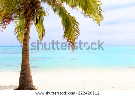 beautiful palm tree at the empty beach at aitutaki, cook islands - stock photo