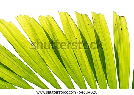 Beautiful palm tree leaf on white background - stock photo