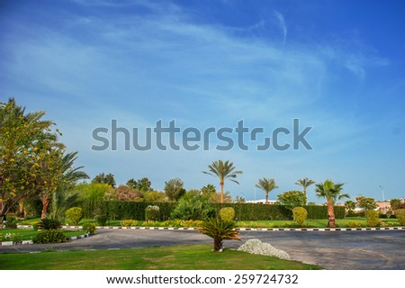 Beautiful palm trees on the hotel in Egypt. - stock photo