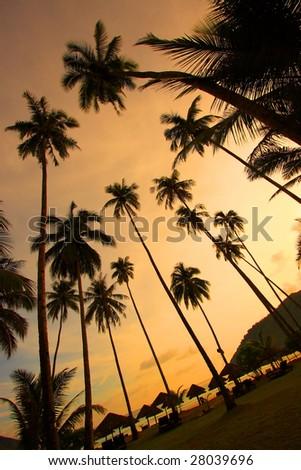 Beautiful Panorama at a Tropical Beach - stock photo