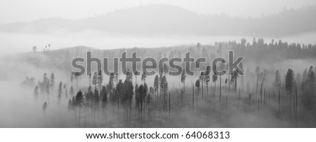 Beautiful panorama of a forest covered by low clouds in Yosemite National Park, California. - stock photo