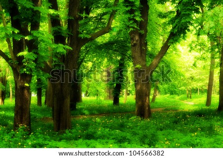 Beautiful park alley with chestnut trees in summer