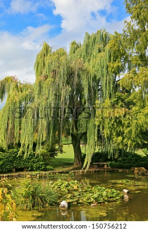 Beautiful park Sigurta in northern Italy. Weeping willows in a quiet pond - stock photo
