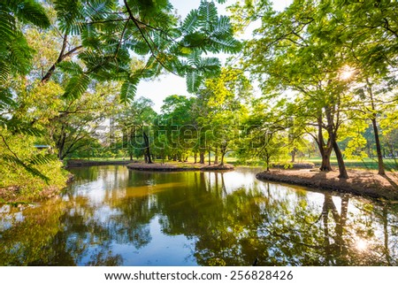 Beautiful park tree with green lawn and pond at evening sunset time - stock photo