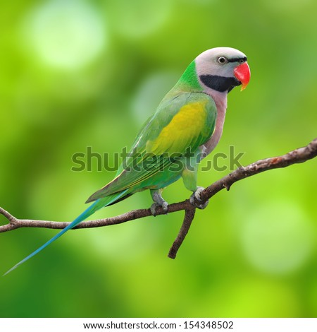 Beautiful parrot bird on green background - stock photo