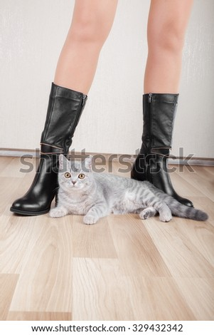 Beautiful patent leather shoes with thin legs and a cat - stock photo