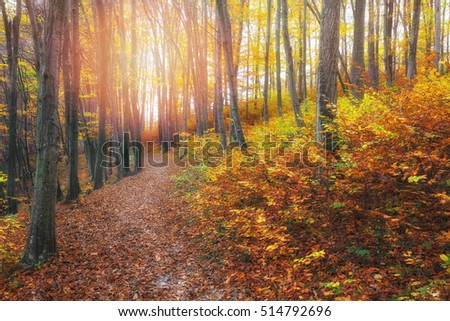 Beautiful path in beautiful autumn forest