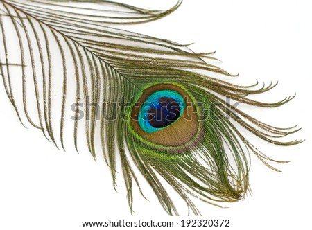 Beautiful  peacock feather - stock photo