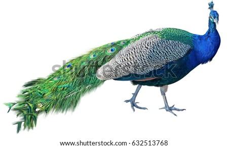 peacock deutsch