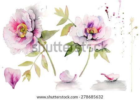 Beautiful peonies on white background. Red Peony flower botanical watercolor set. - stock photo