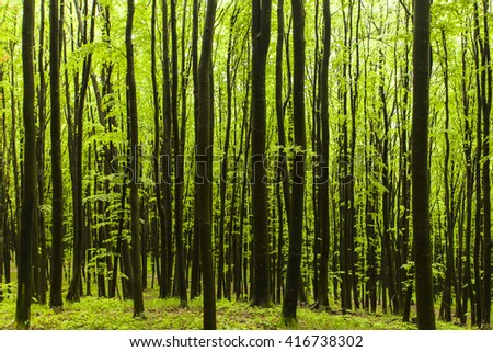 beautiful periodic green forest wall - stock photo