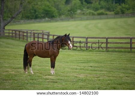 Beautiful Horse Grazing Green Pasture Barn Stock Photo
