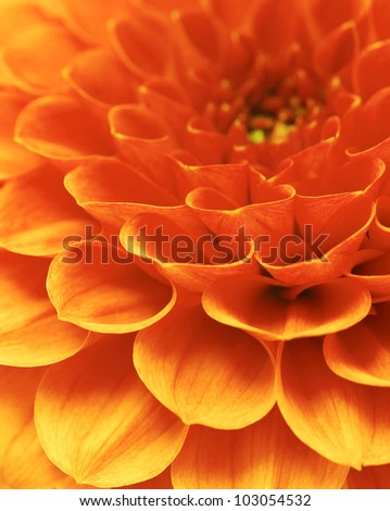 beautiful petals - stock photo