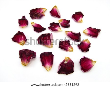 Beautiful petals of roses on a white background - stock photo