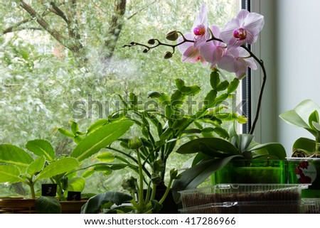 Beautiful phalaenopsis and other flowers on the windowsill