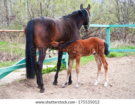 Beautiful photo of horse with foal in summer