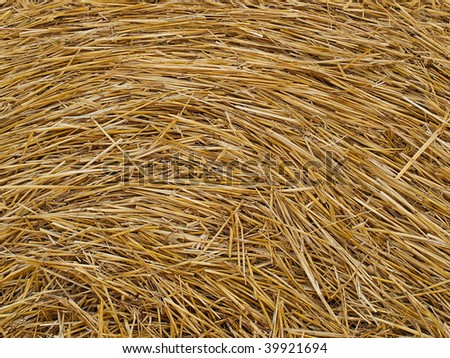Beautiful photo of yellow and juicy hay - stock photo