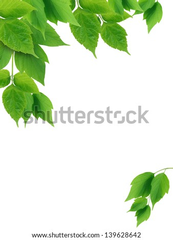 Beautiful picture frame made from green leaves on white background - stock photo