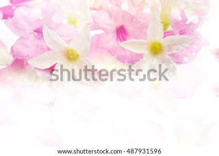 beautiful pink and white romance flower blossom in soft tone, concept for love valentine,wedding or any special events
