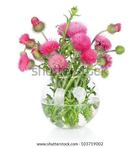 beautiful pink burdock wild flowers in vase isolated on white - stock photo