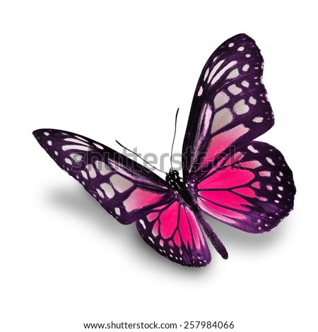 Beautiful pink butterfly flying isolated on white background - stock photo