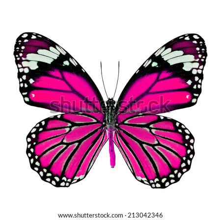 Butterfly Drawings With Color Pink Butterfly Drawings Wit...