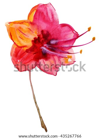 Beautiful pink flower, Watercolor painting - stock photo