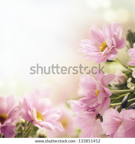 Beautiful pink flowers and butterfly in the garden - stock photo