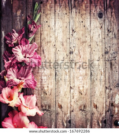 beautiful pink flowers on wooden background/ Spring flowers - stock photo
