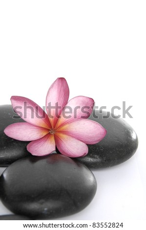 Beautiful pink frangipani on zen stones