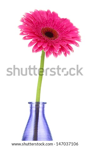 Beautiful pink gerbera flower in vase isolated on white - stock photo