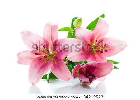 Beautiful pink lily flowers over white background. - stock photo