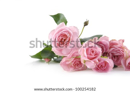 beautiful pink little roses