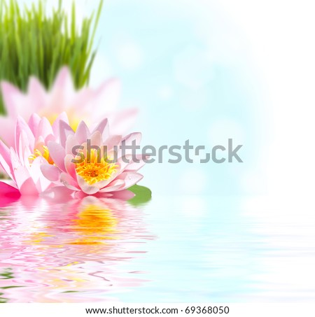 Beautiful pink lotus flower floating in water - stock photo