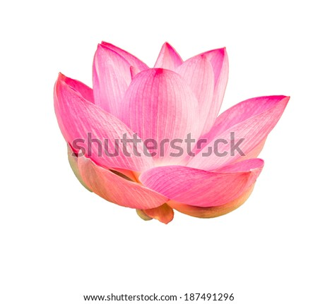 Beautiful pink lotus isolated on white background