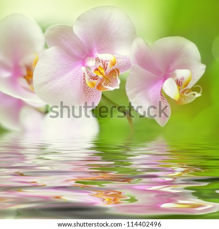 beautiful pink orchid flower background reflected in water - stock photo