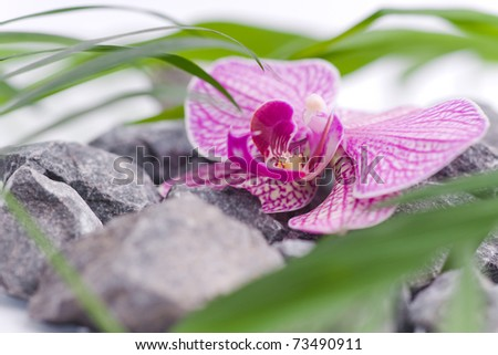 beautiful pink orchid flower on grey stones - stock photo