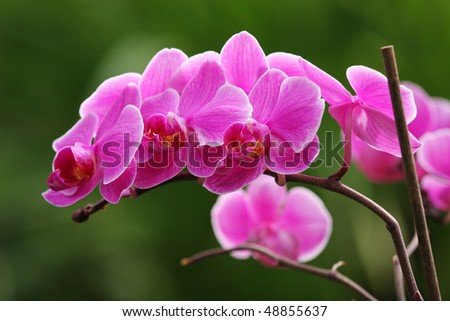 Beautiful pink orchid flowers - stock photo