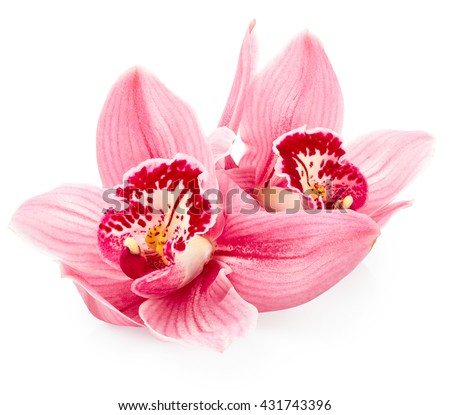 Beautiful pink orchid flowers isolated on white background - stock photo