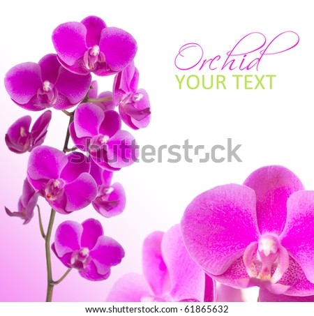 beautiful pink orchid flowers with sample text on white background - stock photo