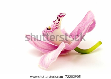 Beautiful pink orchid on white background - stock photo
