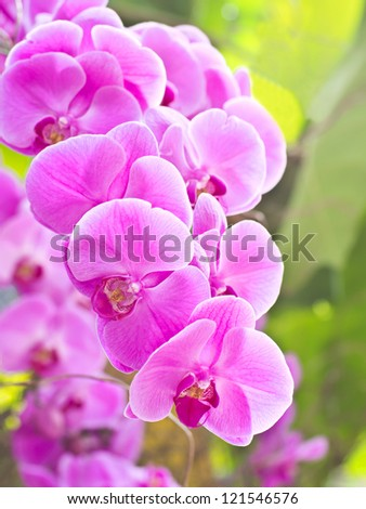 Beautiful pink orchid - phalaenopsis - stock photo