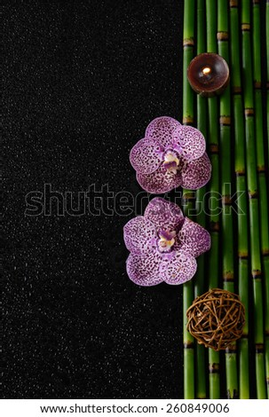 beautiful pink orchid with on bamboo grove  - stock photo