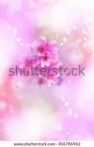 Beautiful pink purple flower background, spring background with sunshine. - stock photo