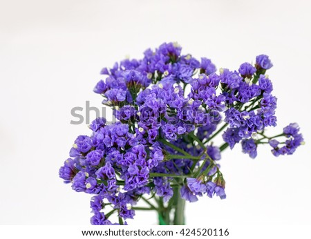 Beautiful pink, purple flowers on white background / spring or summer background