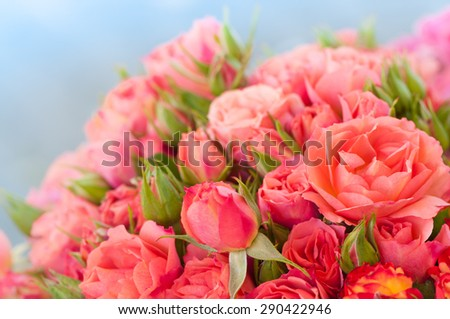 Beautiful pink rose bouquet with blossoms and buds against light blue and blurred background