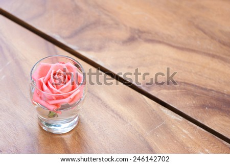 Beautiful pink rose in a glass decorate on the wood table. - stock photo