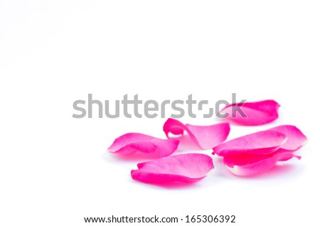beautiful pink rose  petals on a white background - stock photo