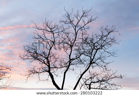 Beautiful pink sky with a tree without leaves at front - stock photo